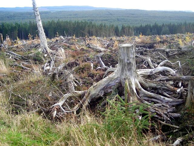 stumps1