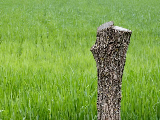 stumps2