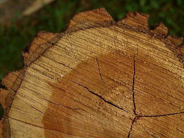 stumps3