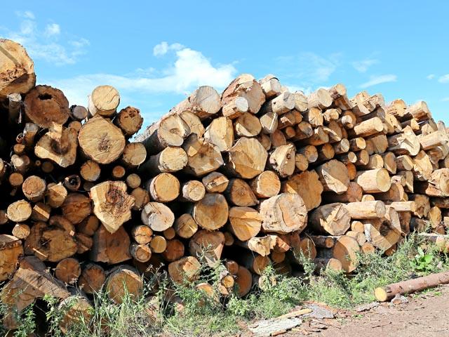 stumps4